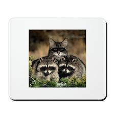 Raccoons ID Theft Mousepad