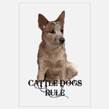 Cattle Dog (ACD)