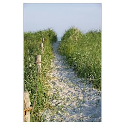 New England Coastal Dune Path Poster