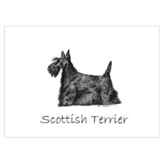 Scottish Terrier ink drawing Poster