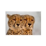 Cheetahs Rectangle Magnet (10 pack)