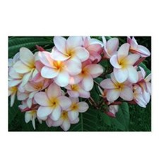 Pretty Pink Plumeria Flowers Postcards (Package of