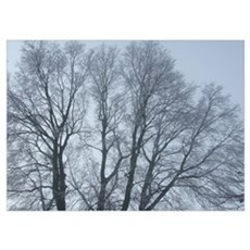 Large tree in winter - photo print Poster