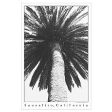 palm tree in black + white Poster