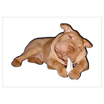 Chinese Shar Pei Dog Poster