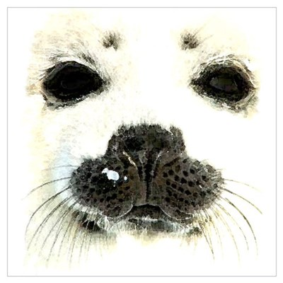 harp seal 1 Canvas Art