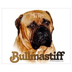 Bullmastiff - color Poster