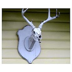 Deer Skull Trophy Poster