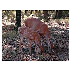 Deer 2 Poster