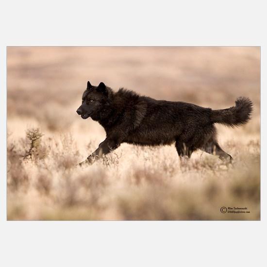 """Black Wolf"" Economy Print"