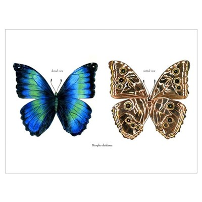 Tropical Morpho Butterfly Canvas Art