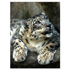 Snow Leopard Canvas Art