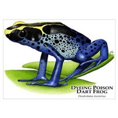 Dyeing Poison Dart Frog Poster