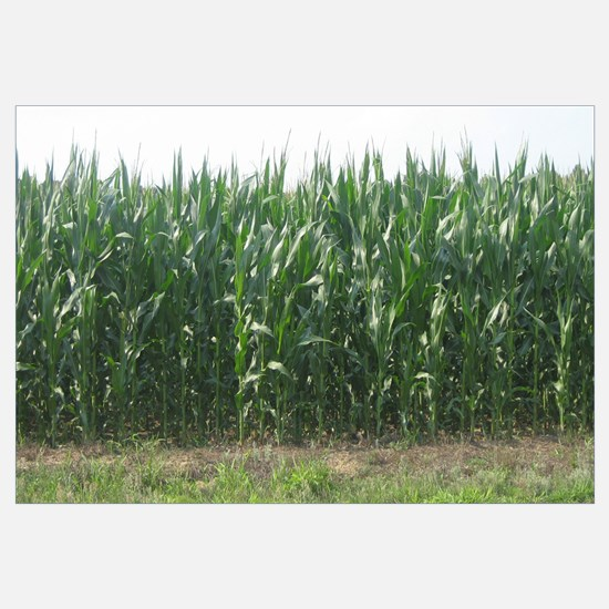 """Corn Field"""