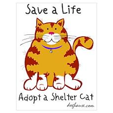 Shelter Cat Poster