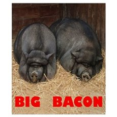 Big Bacon Pot Bellied Pigs Poster