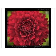 Red Flower Dahlia Photograph Poster