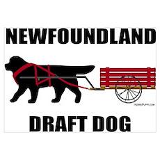 Newfoundland Draft Dog Poster
