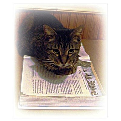Cat Reading Poster