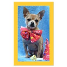 Timmy the Chihuahua Poster