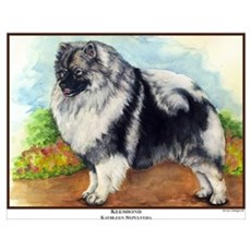 Keeshond Painting Poster