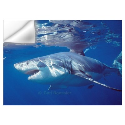 Great white shark on attack Wall Decal