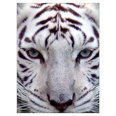 White Tiger 2 Poster