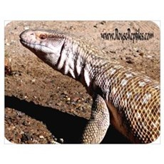 Savanna Monitor:Yugi B Poster