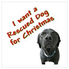 Christmas Rescued Dog Framed Print