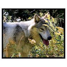 """Tundra Wolf"" Poster"