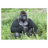 Gorilla Posters