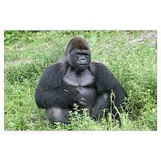 -Gorilla Poster