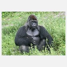-Gorilla