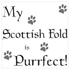 Purrfect...Scottish Fold Poster