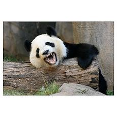 -Panda Poster