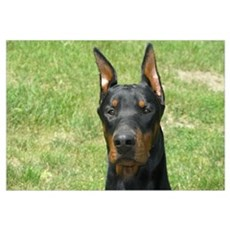 Doberman Canvas Art