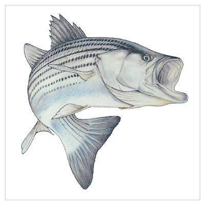 Lunker's Stripe Bass Poster