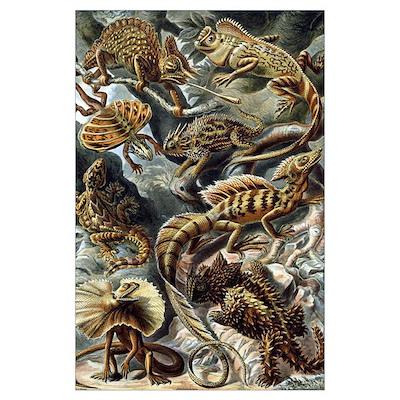 Lizards 11x17 Print Poster