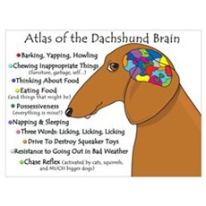 Dachshund Brain Atlas Framed Print
