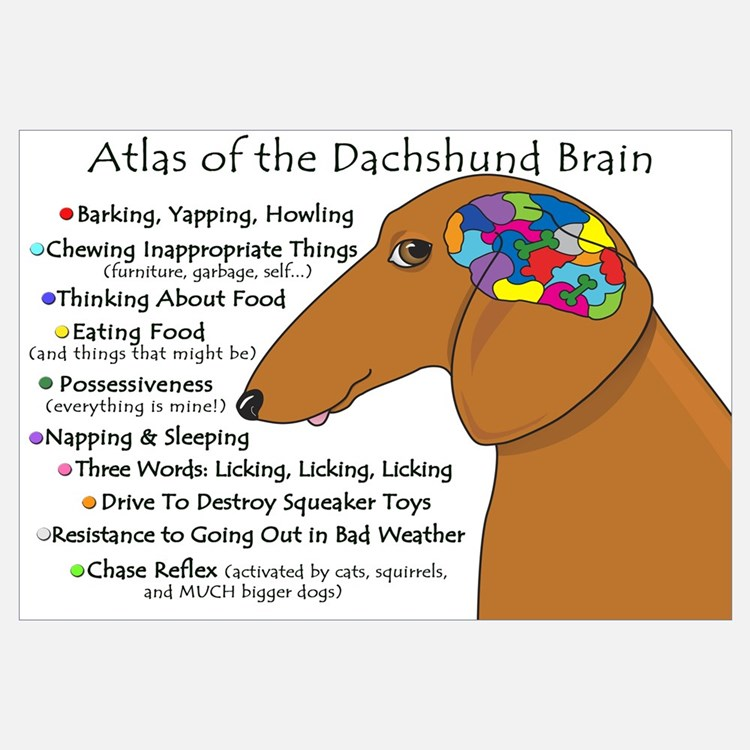 Dachshund Brain Atlas