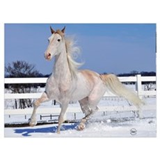 Red Roan in Snow Poster