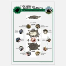 Field Guide to the Western Pond Turtle (Lg )