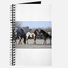 2006 foals Journal