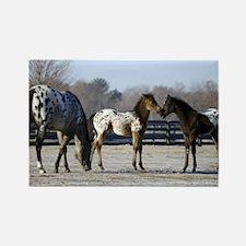 2006 foals Rectangle Magnet