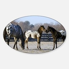 2006 foals Oval Decal