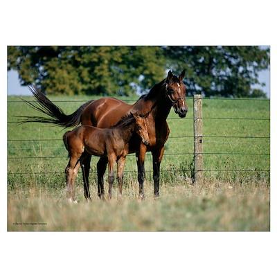 Horses-177 Poster