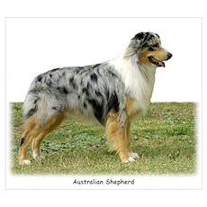 Australian Shepherd 9K7D-20 Poster