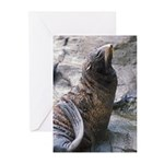 Proud Sea Lion Poses Greeting Cards (Pk of 20)