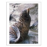 Proud Sea Lion Poses Small Poster