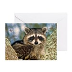 Raccoon Up a Tree Greeting Cards (Pk of 20)